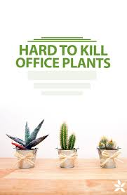 office plant best 25 office plants ideas on pinterest best office plants