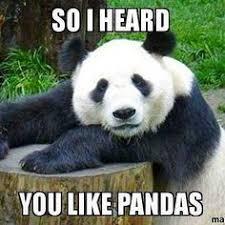Funny Panda Memes - pictures of funny pandas best image of panda 2018