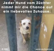 Tierheim Bad Salzuflen Hunde 02 A Tierschutztiere U2013 Warum U2013 Andreas Tierhilfe