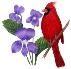 Flower And Bird - illinois state bird and flower cardinal cardinalis cardinalis