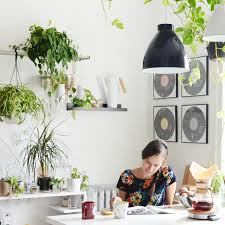 plants for on top of kitchen cabinets 8 kitchen plants best houseplants that thrive in kitchens