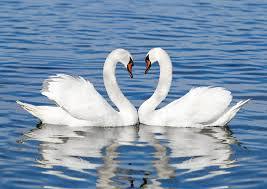 14 animals that mate for life u2013 nat geo tv blogs
