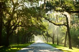 All Island Landscape by Palmetto Bluff An Ecological Fête For All Island Vibe Blog