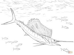 atlantic sailfish coloring page free printable coloring pages