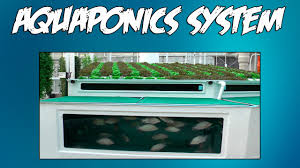 aquaponics kit youtube
