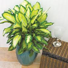 plants at home houseplants
