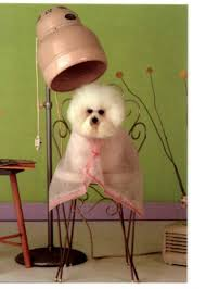 how to become a pet groomer