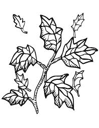autumn leaf from tree branch coloring page autumn leaf from tree