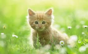 Cute Kitten Memes - cute kitten wallpaper cats know your meme