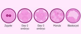 symptoms after embryo transfer most common positive signs