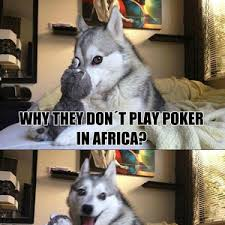 Pun Husky Meme - husky birthday meme birthday best of the funny meme