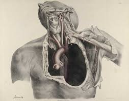 Pictures Of The Anatomy Of The Human Body Historical Anatomies On The Web Browse Titles