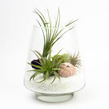 diy terrarium kits for succulents and air plants