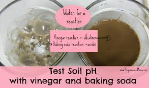 What Type Of Soil To Use For Vegetable Garden Testing Your Soil Ph Without A Kit Preparednessmama