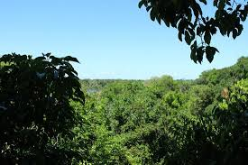 canopy amazon view from the canopy picture of amazon tree climbing manaus