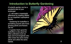 Meaningful Butterfly - butterfly and bee collection for the high country