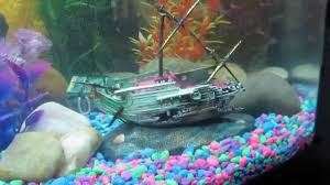 freshwater fishtank with several penn plax air toys
