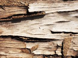 free photo wood bark texture tree nature free image on