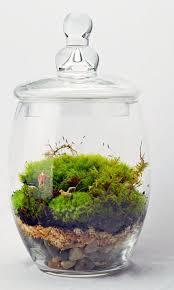 best 25 moss terrarium ideas on pinterest moss garden growing