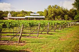 Texas - Backyard vineyard design