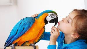best birds for a beginner pet bird youtube