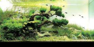 Amano Aquascaping Aquascaping U2013 Aquaec Tropical Fish