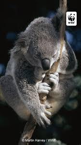 free wwf iphone wallpaper world wildlife fund