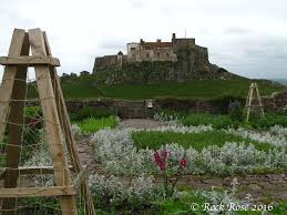 rock rose walls and walled gardens of great britain