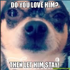 Cute I Love You Meme - do you love him then let him stay make a meme