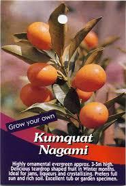 berri native plants 14 best native australian flora images on pinterest exotic fruit
