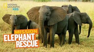 mission animal rescue