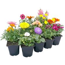 potted flowers 100mm assorted potted plants bunnings warehouse