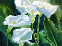 cala lillies white calla lilies painting by freeman