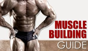 program latihan pembentukan otot muscle building satriyoblogsport
