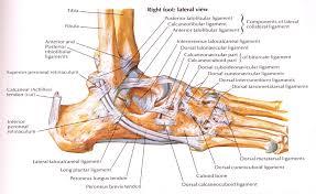 High Ankle Sprain Anatomy 14 U2013 Ankle Sprains Paine Podcast And Medical Blog