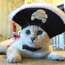 Pet Cat Halloween Costume Cats Halloween Costumes Instagram Popsugar Pets