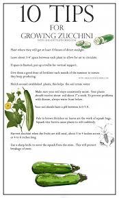 Squash Plant Diseases Pictures - best 25 zucchini plants ideas on pinterest growing zucchini