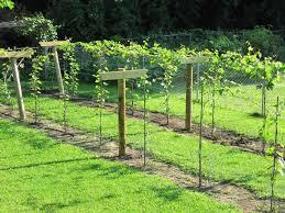 homemade garden trellis ideas u2013 awesome house trellis ideas for