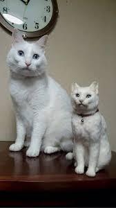 tabliers de cuisine personnalis駸 寝転ぶキジ白猫さん商品説明数ある作品の中からご覧いただきまして