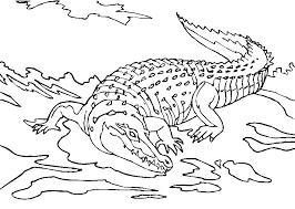 Dessin de coloriage Crocodile à imprimer  CP08863
