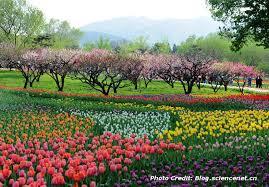 Beijing Botanical Garden Beijing Parks Cnto China Like Never Before