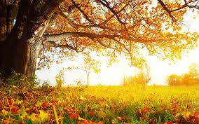 autumn tree desktop wallpapers this wallpaper