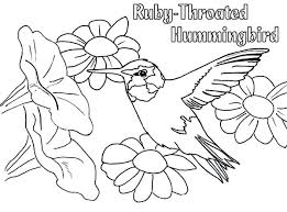 beautiful hummingbird coloring images style and ideas rewordio us