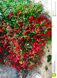 garden design garden design with climbing plants for flowers and