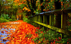 hd fall wallpapers 60 images