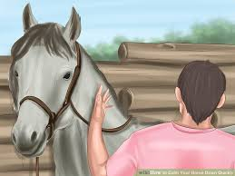 How To Tell If A Horse Is Blind How To Calm Your Horse Down Quickly 14 Steps With Pictures