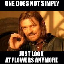 Look At The Flowers Meme - one does not simply just look at flowers anymore jpegy what the
