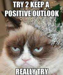 Grumpy Cat New Years Meme - 66 best happy new year cats images on pinterest funny animal