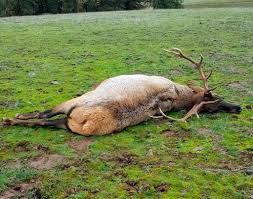 charges detail extensive poaching ring in washington oregon the
