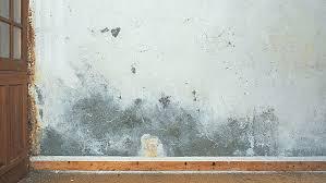 moisissure mur chambre 3 astuces de grand mère pour enlever la moisissure